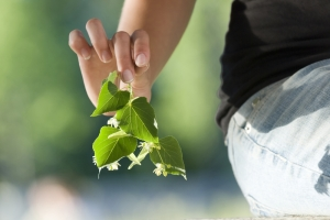 shutterstock_holding a leaf