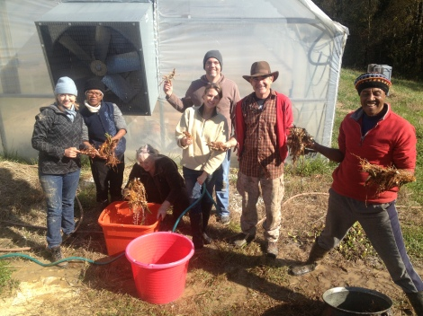 Our fall 2012 class with Will's Wild Herbs.  We are processing calamus.